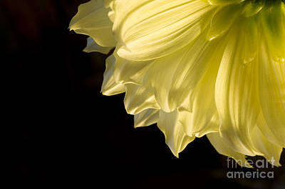 Photograph - Yellow On Black by Ronald Hoggard