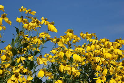 Photograph - Yellow On Blue by Lois Lepisto