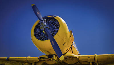 Photograph - Yellow On Blue Static by Jorge Perez - BlueBeardImagery