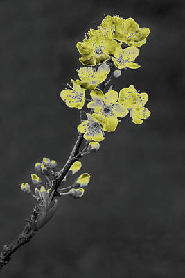 Photograph - Yellow On Gray by Rick Strobaugh