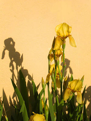 Photograph - Yellow On Yellow by Anne Cameron Cutri