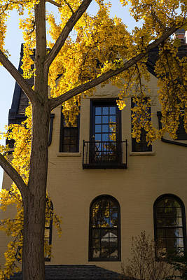 Photograph - Yellow On Yellow - Golden Ginkgo Biloba And An Elegant Facade by Georgia Mizuleva