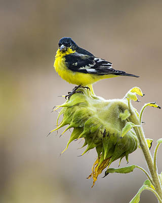 Photograph - Yellow On Yellow by John Brink