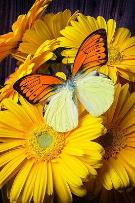 Beautiful Butterfly Photograph - Yellow Orange Butterfly Two by Garry Gay