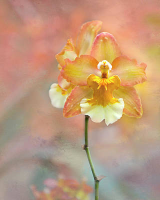 Photograph - Yellow Orchid by Ann Bridges