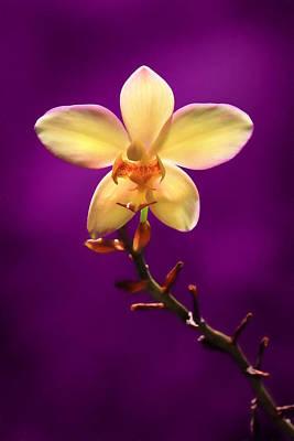 Yellow Orchid Art Print by Lori Deiter