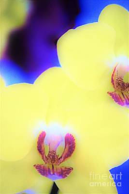Yellow Orchid Art Print