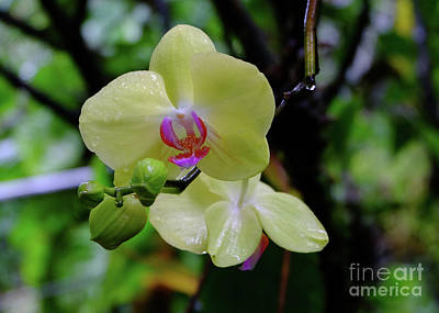 Photograph - Yellow Orchid by Mini Arora