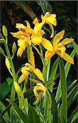 Willa Davis Photograph - Yellow Orchids I by Willa Davis