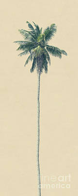 Photograph - Yellow Palm by Andrew Paranavitana