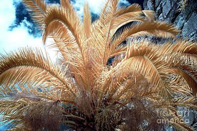 Photograph - Yellow Palm Tree by John Rizzuto