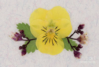 Yellow Pansy And Coral Bells Pressed Flowers Art Print