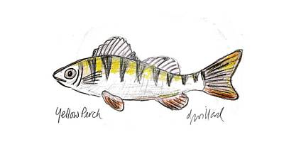 Drawing - Yellow Perch by Deborah Willard