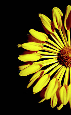 Yellow Petals Art Print