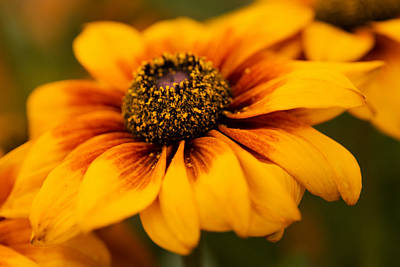 Photograph - Yellow Petals by Mary Jo Allen