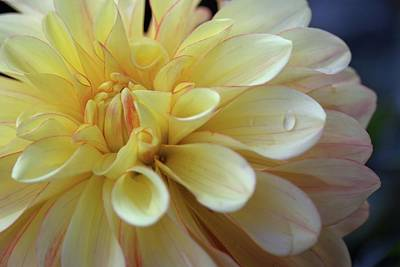 Photograph - Yellow Petals With Raindrop by Patricia Strand