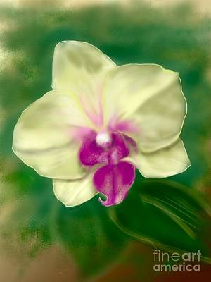 Yellow Phalenopsis Art Print