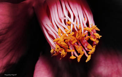 Photograph - Yellow Pollen 01 by Kevin Chippindall