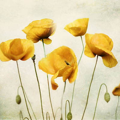 Shower Curtain Photograph - Yellow Poppies - Square Version by Amy Tyler