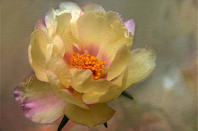 Yellow Portulaca Art Print by Ann Bridges
