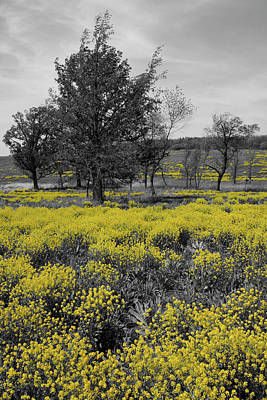 Photograph - Yellow Prairie I by Dylan Punke