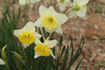 Yellow Pretty In White Art Print by John Adams
