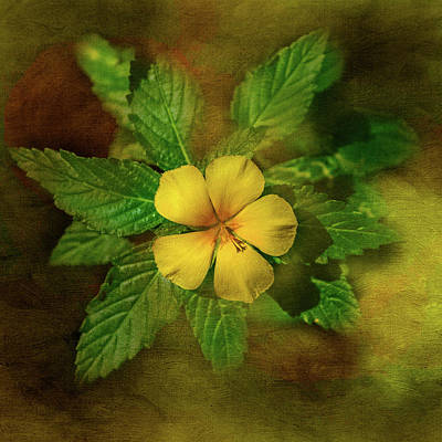 Photograph - Yellow Primrose by Steven Greenbaum