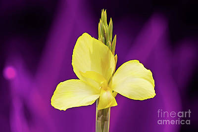 Digital Art - Yellow Purple by Ed Taylor