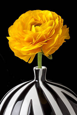 Ranunculus Flower Photograph - Yellow Ranunculus In Striped Vase by Garry Gay