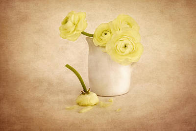 Photograph - Yellow Ranunculus  by Kim Hojnacki