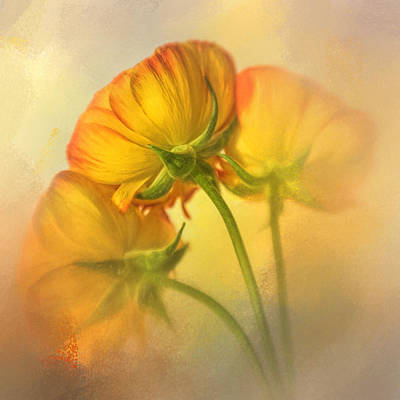 Photograph - Yellow Ranunculus On Yellow by David and Carol Kelly