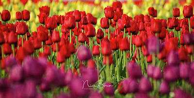 Photograph - Yellow Red Purple by Nick Boren