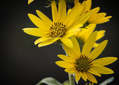 Photograph - Yellow by Ricky Barnard