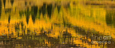 Photograph - Yellow Rising by Steven Parker