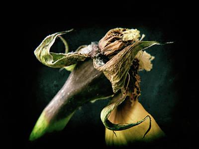 Photograph - Yellow Rose #1 by Janet E Gorman