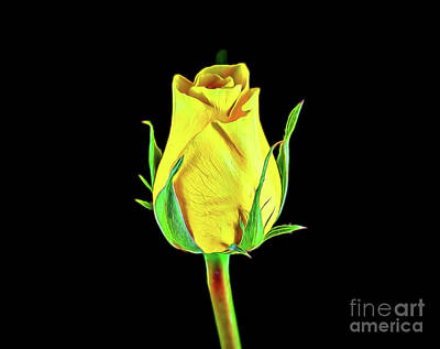 Photograph - Yellow Rose 18-29 by Ray Shrewsberry