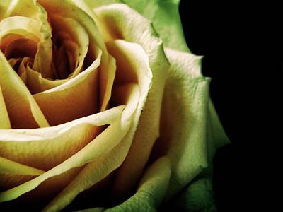 Photograph - Yellow Rose #2 by Janet E Gorman
