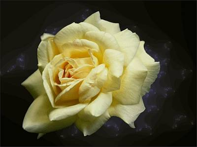 Photograph - Yellow Rose 2 by Tim Allen