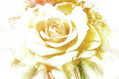 Photograph - yellow Rose by Athala Carole Bruckner