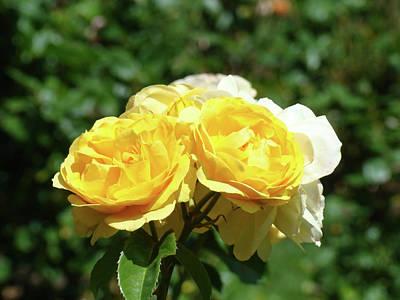 Yellow Rose Bouquet Art Print Roses Garden Baslee Troutman Art Print by Baslee Troutman