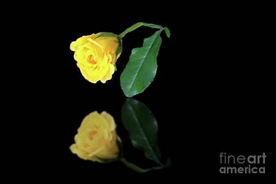 Photograph - Yellow Rose Bud Reflection by Janette Boyd