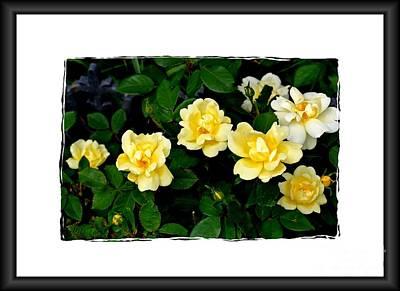 Photograph - Yellow Rose Bush by Marsha Heiken