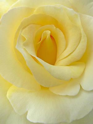 Photograph - Yellow Rose Chiffon by Jennie Marie Schell