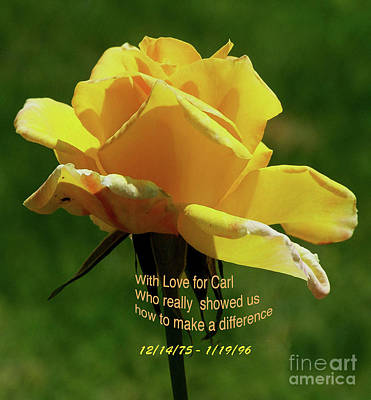 Photograph - Yellow Rose by Debby Pueschel