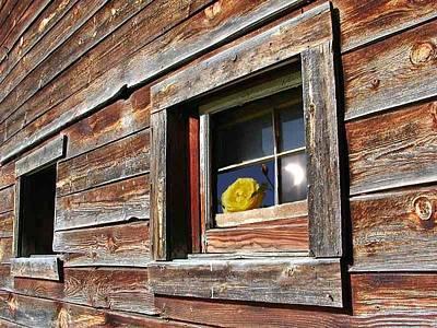 Barns Digital Art - Yellow Rose Eclipse by Tim Allen