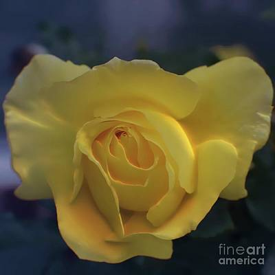 Photograph - Yellow Rose Garden by Ella Kaye Dickey