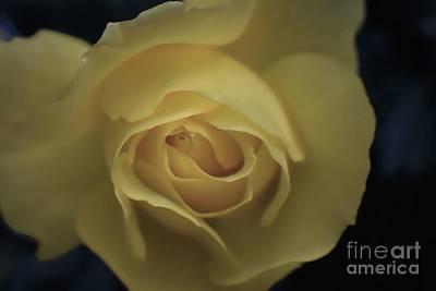 Photograph - Yellow Rose Garden Three by Ella Kaye Dickey