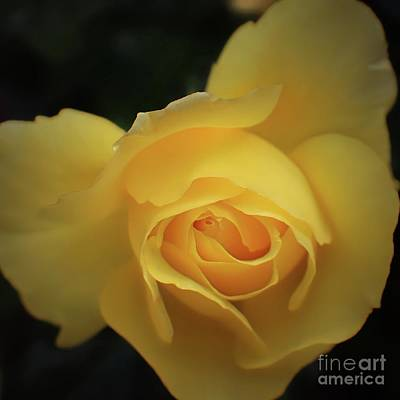 Photograph - Yellow Rose Garden Two by Ella Kaye Dickey