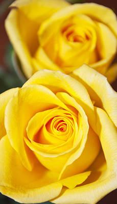 Photograph - Yellow Rose by Glenn Gordon