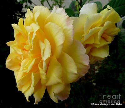 Folkartanna Photograph - Yellow Rose In The Fall by Anna Folkartanna Maciejewska-Dyba